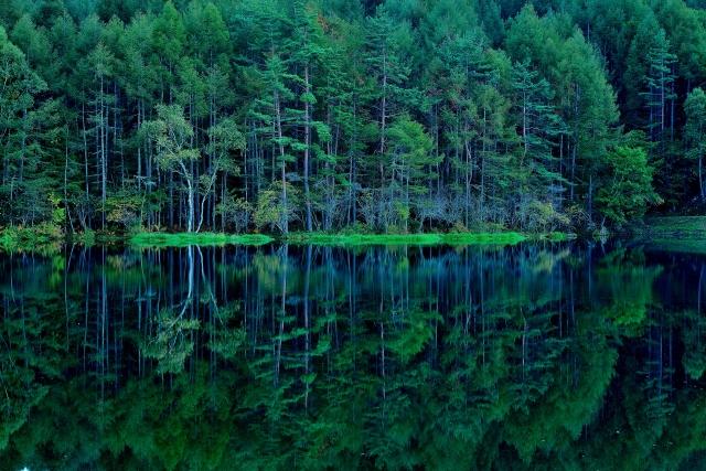Woods in Japan